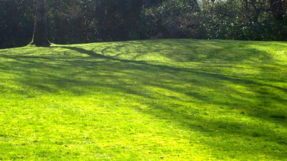Shadows on lawn