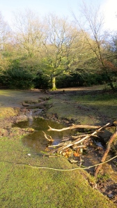 Stream into Eyeworth Pond
