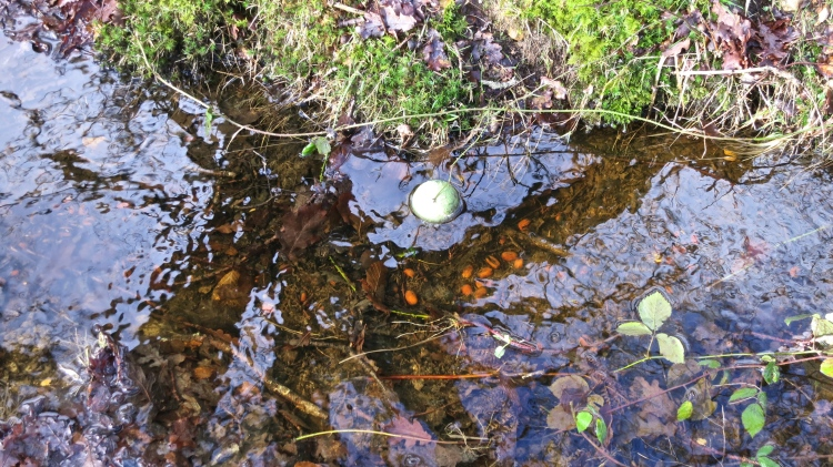 Tennis ball in ditch