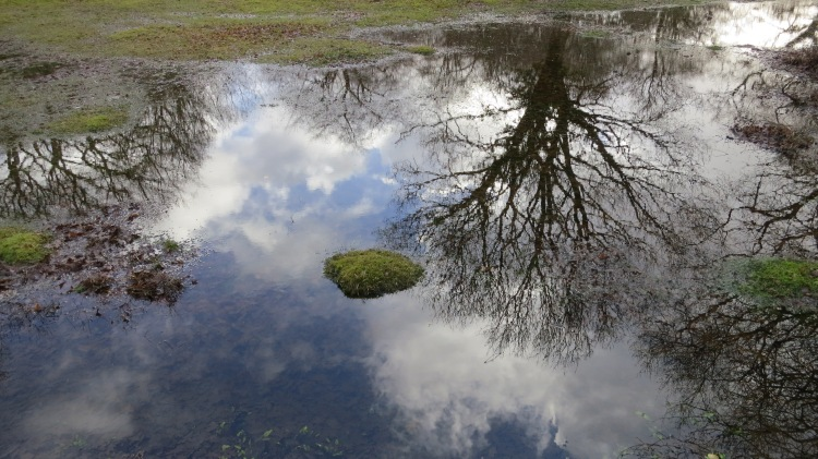 Tree and sky reflections