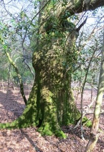 Dappled trunk