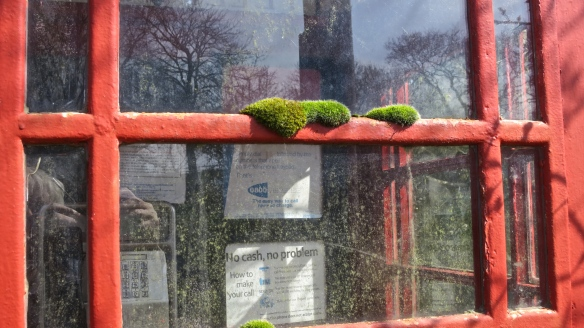 Moss on phonebox