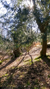 Shadows on wooded slope