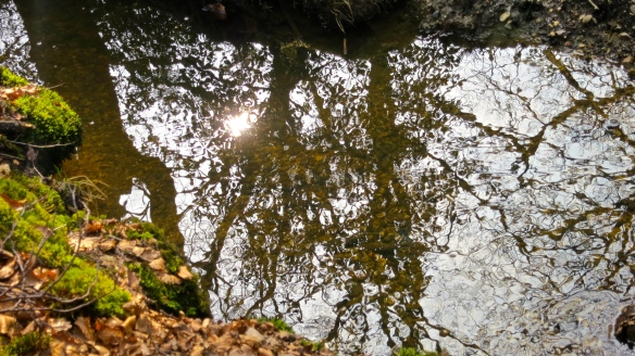 Sun and trees reflected