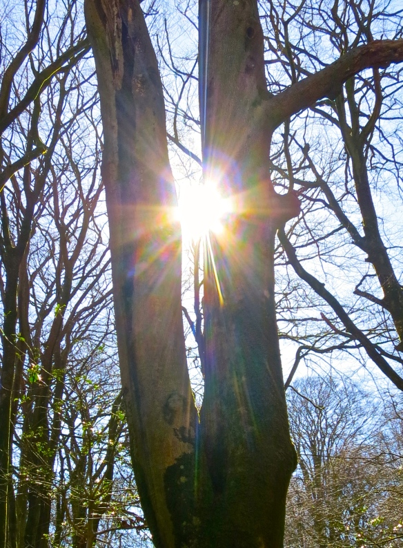 Sunstar through tree - image of young woman