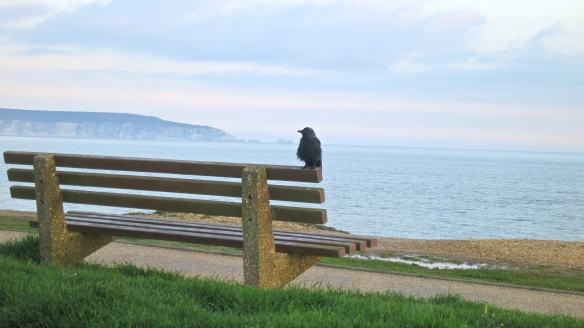 Crow on bench
