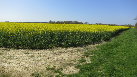 Path round rape field
