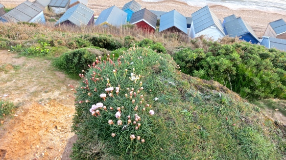 Thrift & beach huts