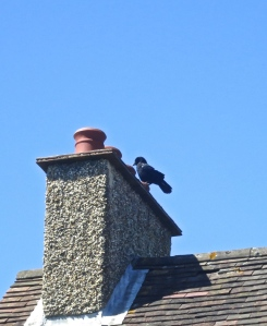 Crow on chimney pots