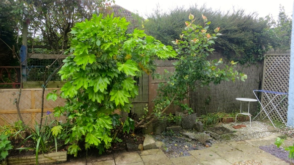 Rose, fig, and unidentified tree