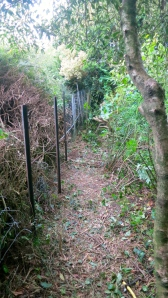 Shrubbery clearance