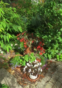 Begonias etc over septic tank cover
