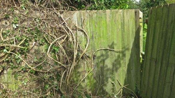 Fence partially cleared