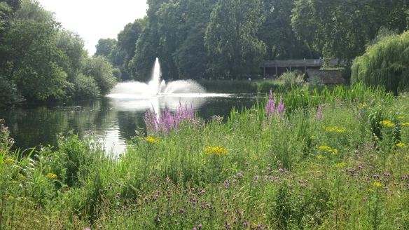 Meadow and fountain