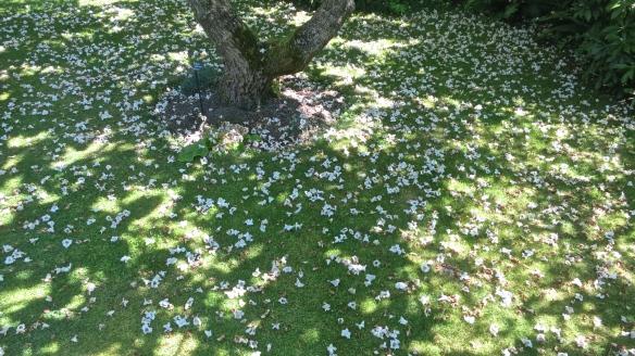 Dappling of catalpa flowers