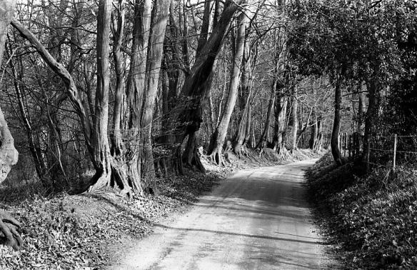 Tree-lined lane1982