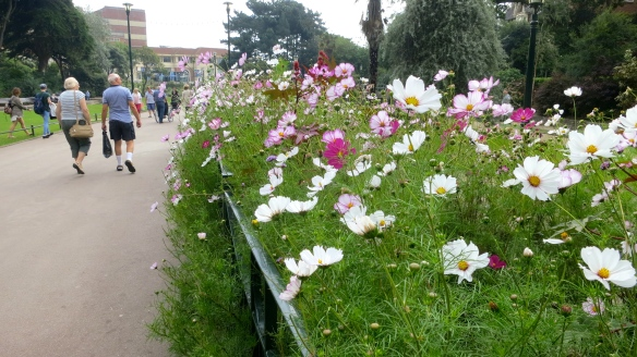 Cosmos in Pleasure Gardens