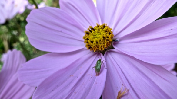 Cricket on cosmos