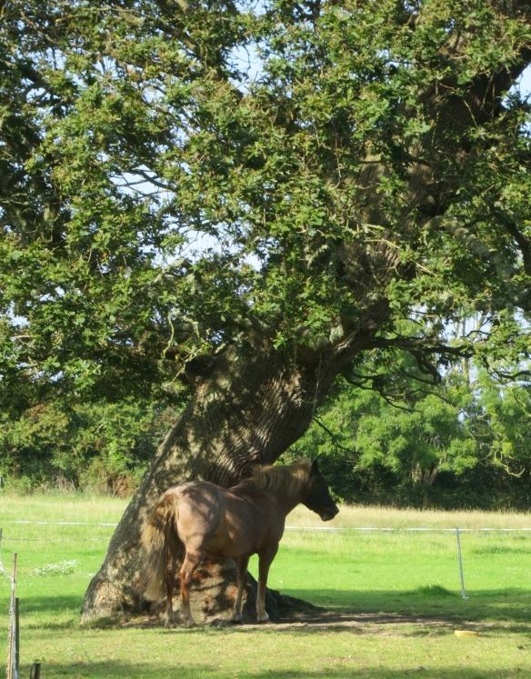 Horse camouflaged