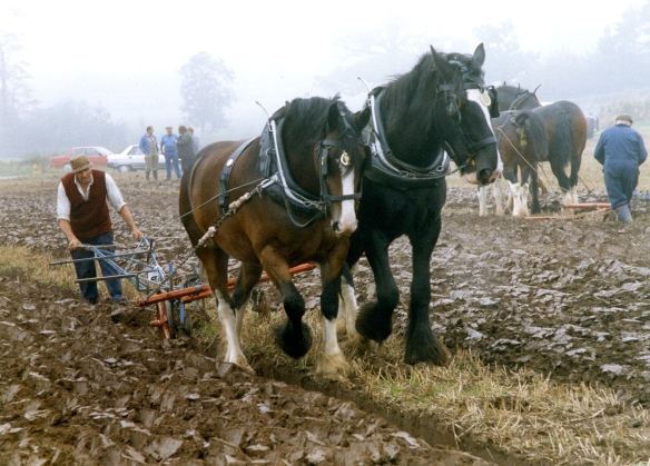 Ploughing contest 26.9.92 007