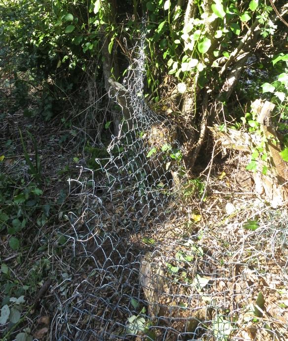Wire netting 2