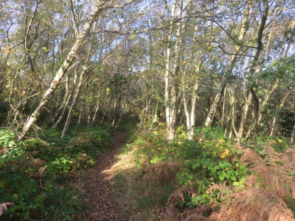 Barton Common 1