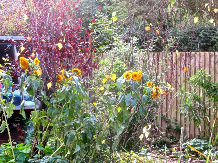 Birch leaves, sunflowers, and prunus