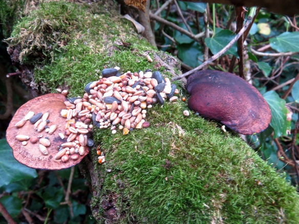 Birdseed on tree fungus