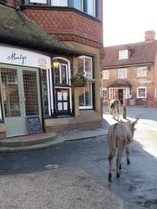 Donkeys outside Monty's