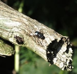 Fly on dead branch