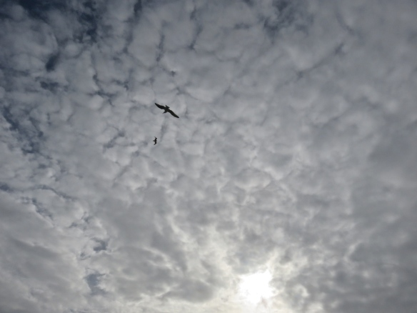 Gulls against clouds