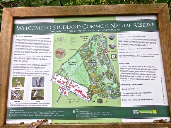 Studland Common Nature Reserve
