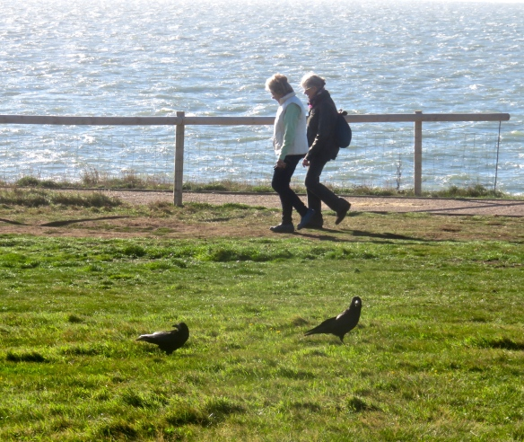 Walkers and crows