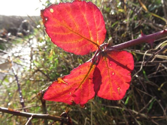 Bramble leaves