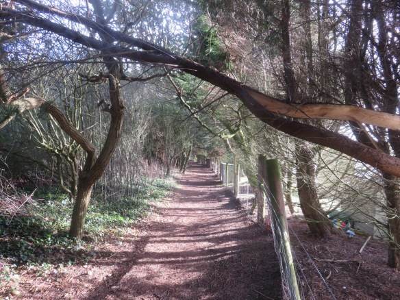 Footpath with fallen branch 2