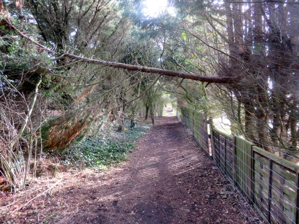 Footpath with fallen branch