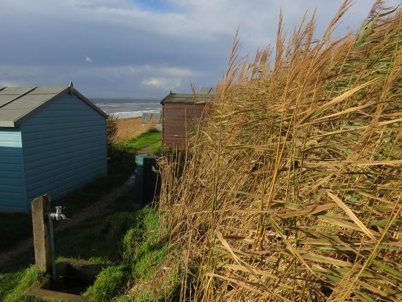 Grasses by sea
