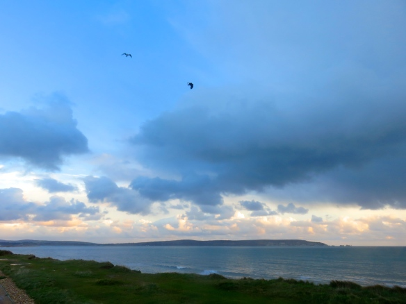 Gull and crow over Solent