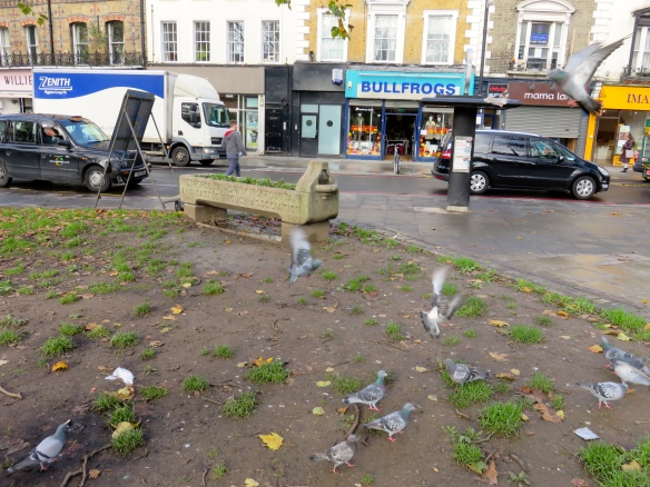 Pigeons and cattle trough