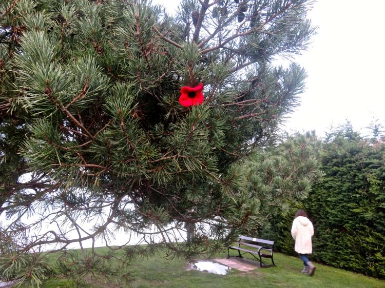 Poppy in tree (Flo)