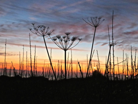 Sunset with cow parsley