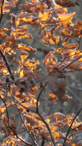 Backlit leaves 2