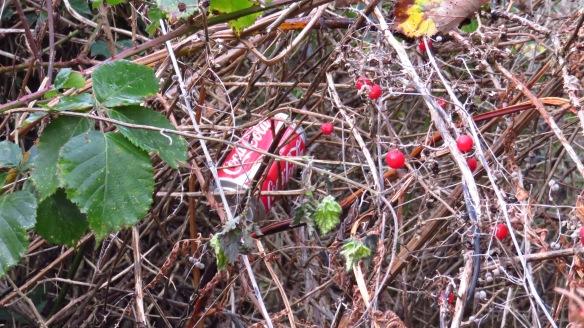 Coke tin in hedge