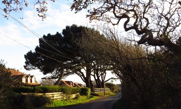 Downton Lane 2