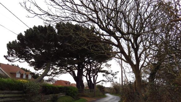 Downton Lane