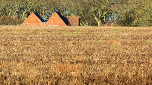 Houses across field