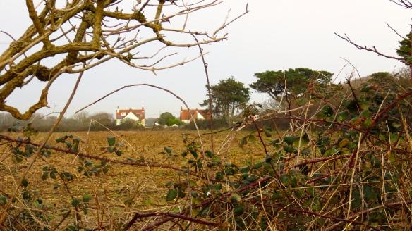 Ivy Cottages