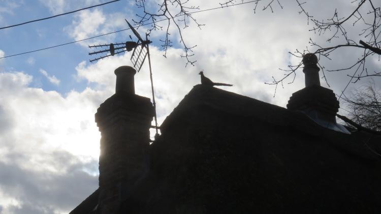 Pheasant thatch finial