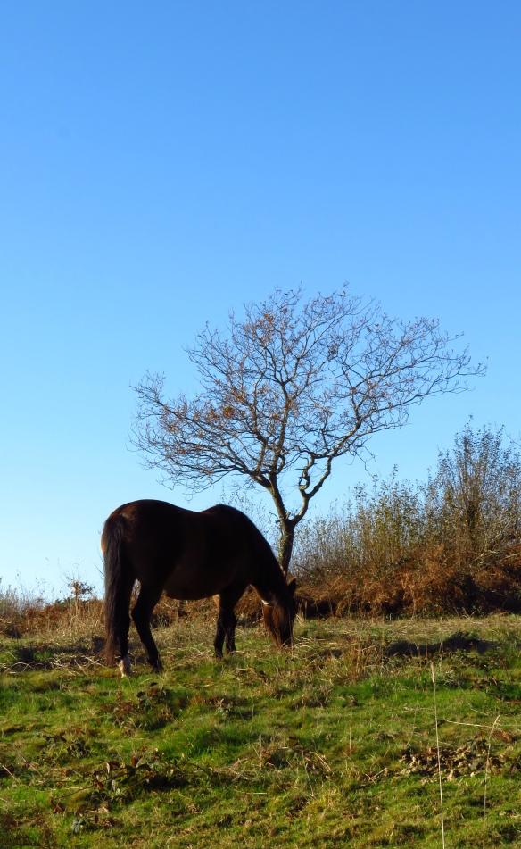 Pony and tree
