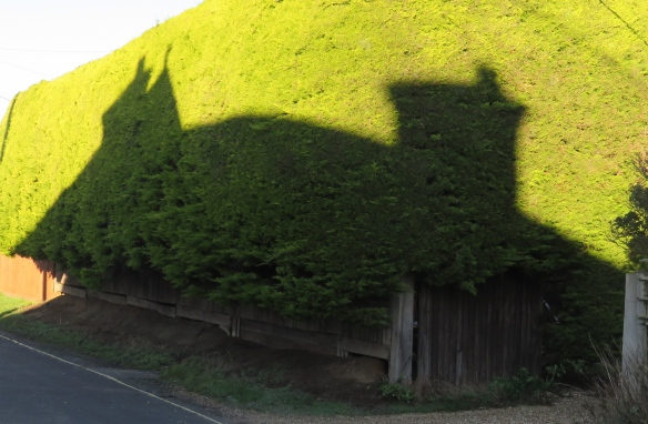 Shadow of building on conifer hedge